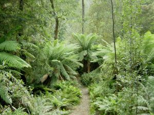 Healthy ecosystems, such as this temperate rainforest in Tasmania provide ecosystem services such as clean air and water that allow life to survive on Earth