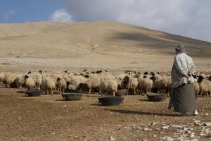 syria-drought