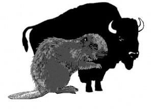 giant-beaver-comparison2-300x214